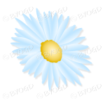 Pale blue flower with yellow middle tilted sideways
