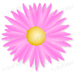 Pink flower with yellow middle