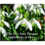 Quote image 6: The best time for new beginnings
