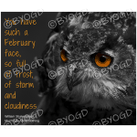 Quote image 22: You have such a February face,