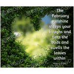 Quote image 37: The February sunshine steeps your