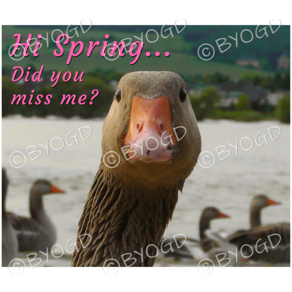 Quote image 43: Hi Spring… Did you miss me?