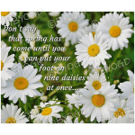 Quote image 46: Don't say that spring has come until
