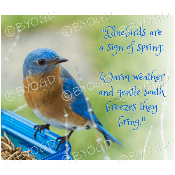 Quote image 49: Bluebirds are a sign of Spring