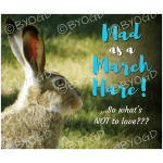 Quote image 51: Mad as a March Hare!