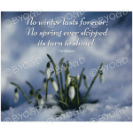Quote image 55: No winter lasts forever; No spring