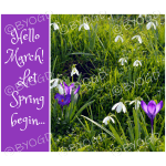 Quote image 57: Hello March! Let Spring begin…
