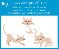 Echo image 2: Echo examples of Cats