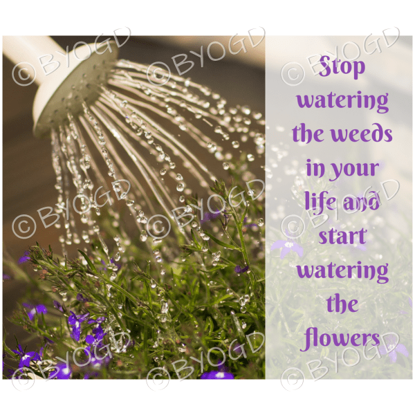 Quote image 74: Stop watering the weeds in your life