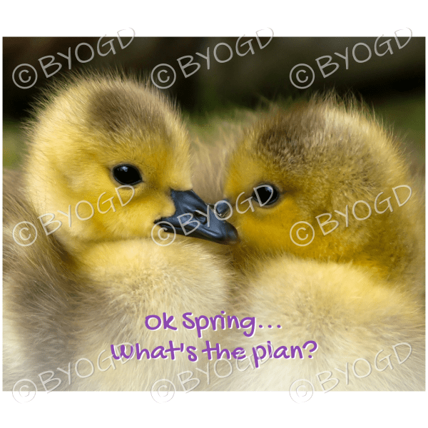 Quote image 89: Ok Spring… what's the plan?