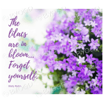 Quote image 91: The lilacs are in bloom
