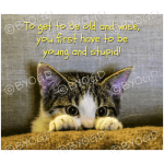 Quote image 92: To be old and wise you first
