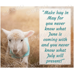 Quote image 101: Make hay in May