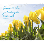 Quote image 120: June is the gateway to summer