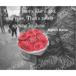 Quote image 124:Oh, my luve's like a red, red rose