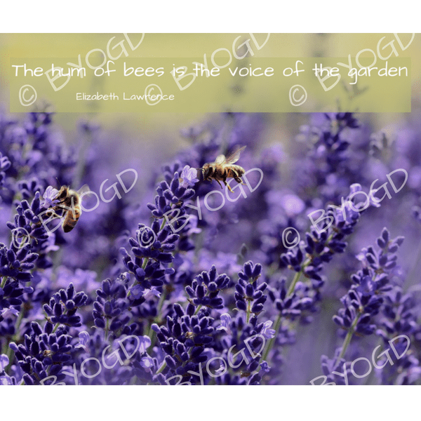 Hum Quote Simple Quote Image 48 The Hum Of Bees ⋆ Be Your Own Graphic Designer
