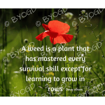 Quote image 139: A weed is a plant that has mastered