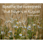 Quote image 169: Breathe the sweetness
