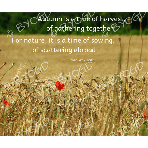 Quote image 177: Autumn is a time of harvest