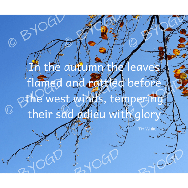 Quote image 192: In the autumn the leaves flamed and rattled