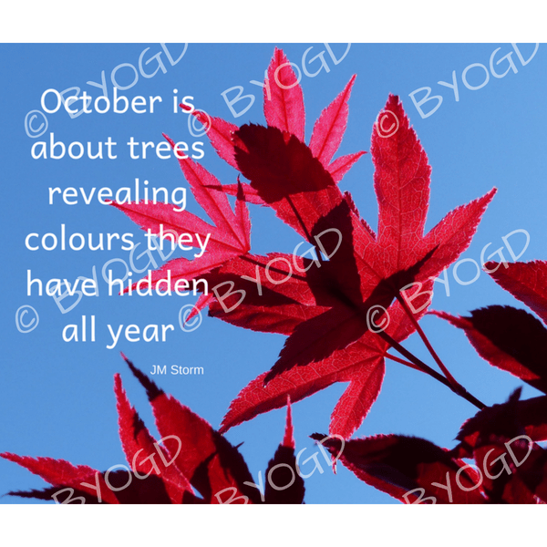 Quote image 202: October is about trees