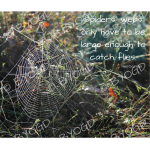 Quote image 219: Spiders' webs only have to be
