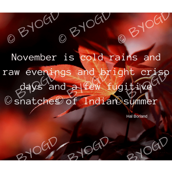 Quote image 228: November is cold rains and raw evenings